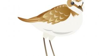 またもや、謎の鳥を発見した?????・・・