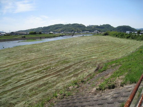 草の丸刈り
