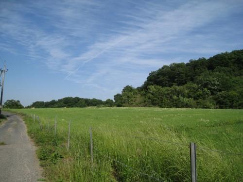 育成牧場&野鳥の森
