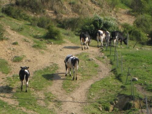 育成牧場の周りの風景