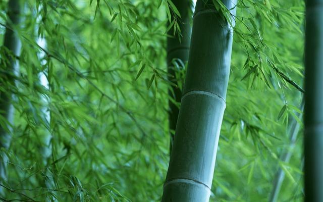 パカーンと竹から生まれた
