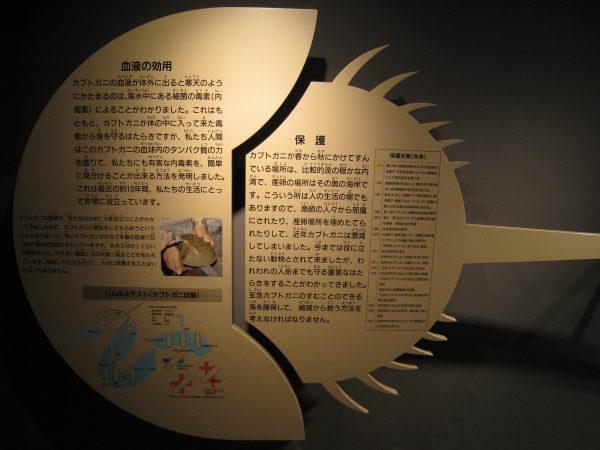 カブトガニ生態模型