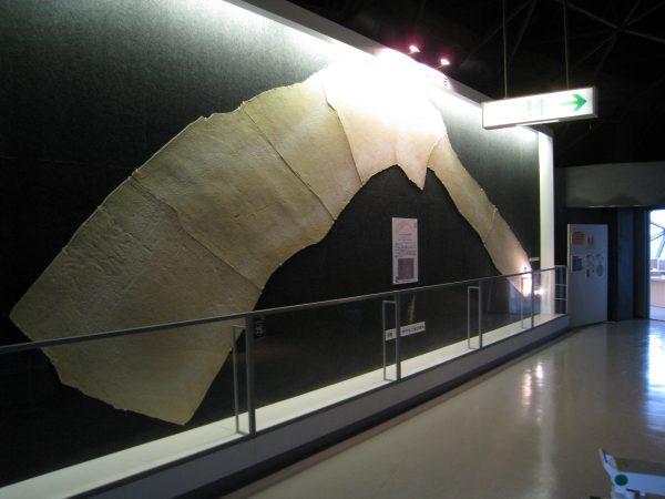這い後化石