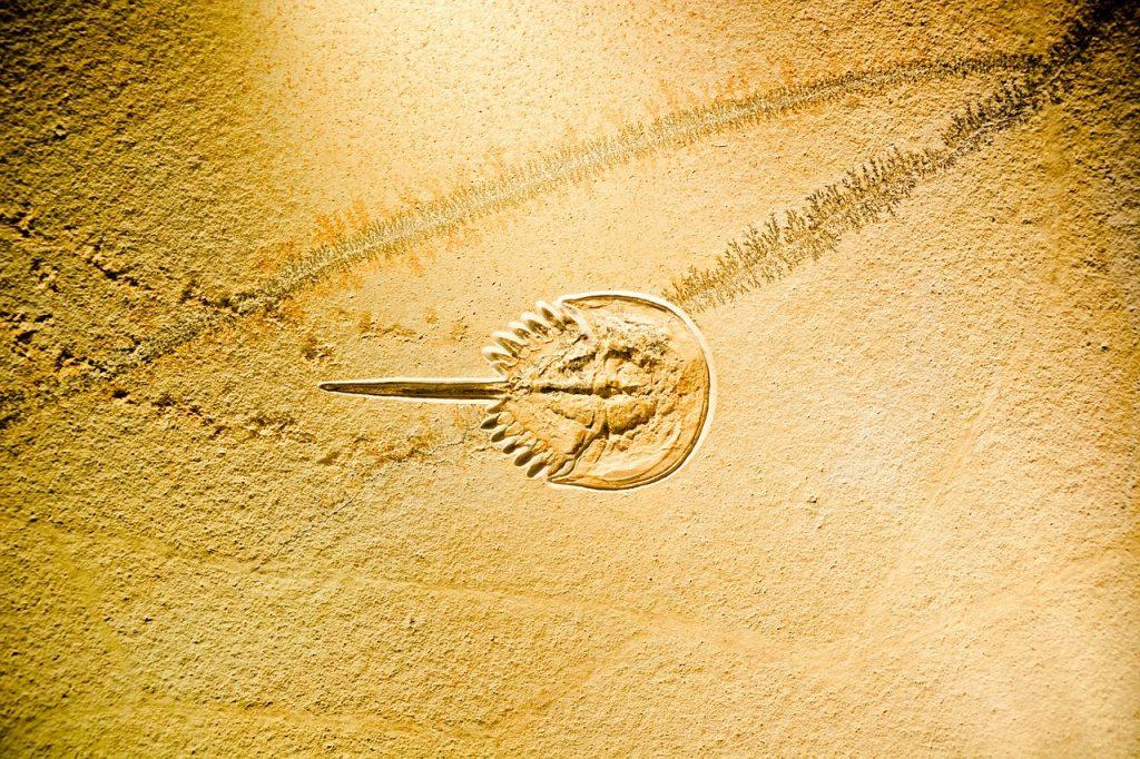 生きた化石