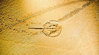 カブトガニ博物館と言うところで、生きた化石が見れるらしい。あと、恐竜も??【笠岡市】