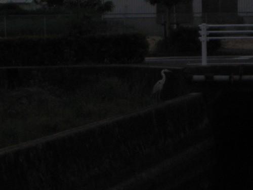 なんかの鳥