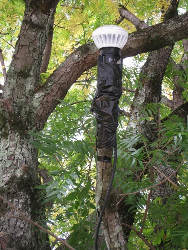 楷の木ライトアップ