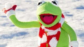 朝から雪が降って一面雪化粧のように白くなっていたぞー!!雪遊びしたーい。【井原市】
