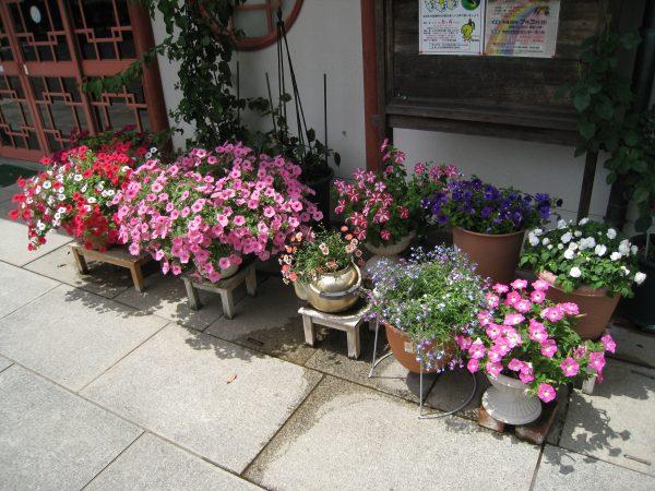 園内のお花