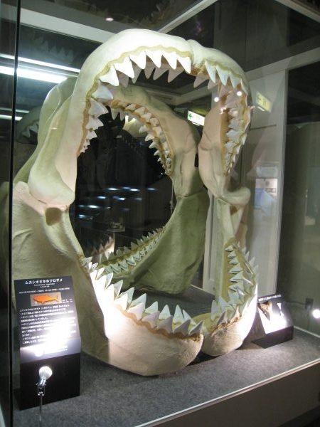 ムカシオオホホジロザメ