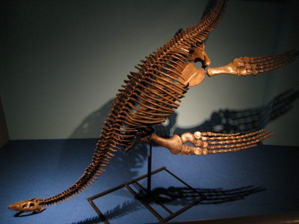 恐竜の模型
