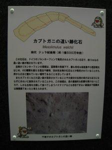 カブトガニの這い跡化石